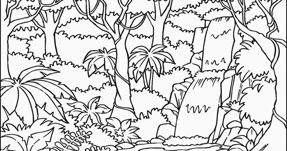 rainforest tree coloring page rainforest trees drawing at getdrawings free download rainforest page tree coloring