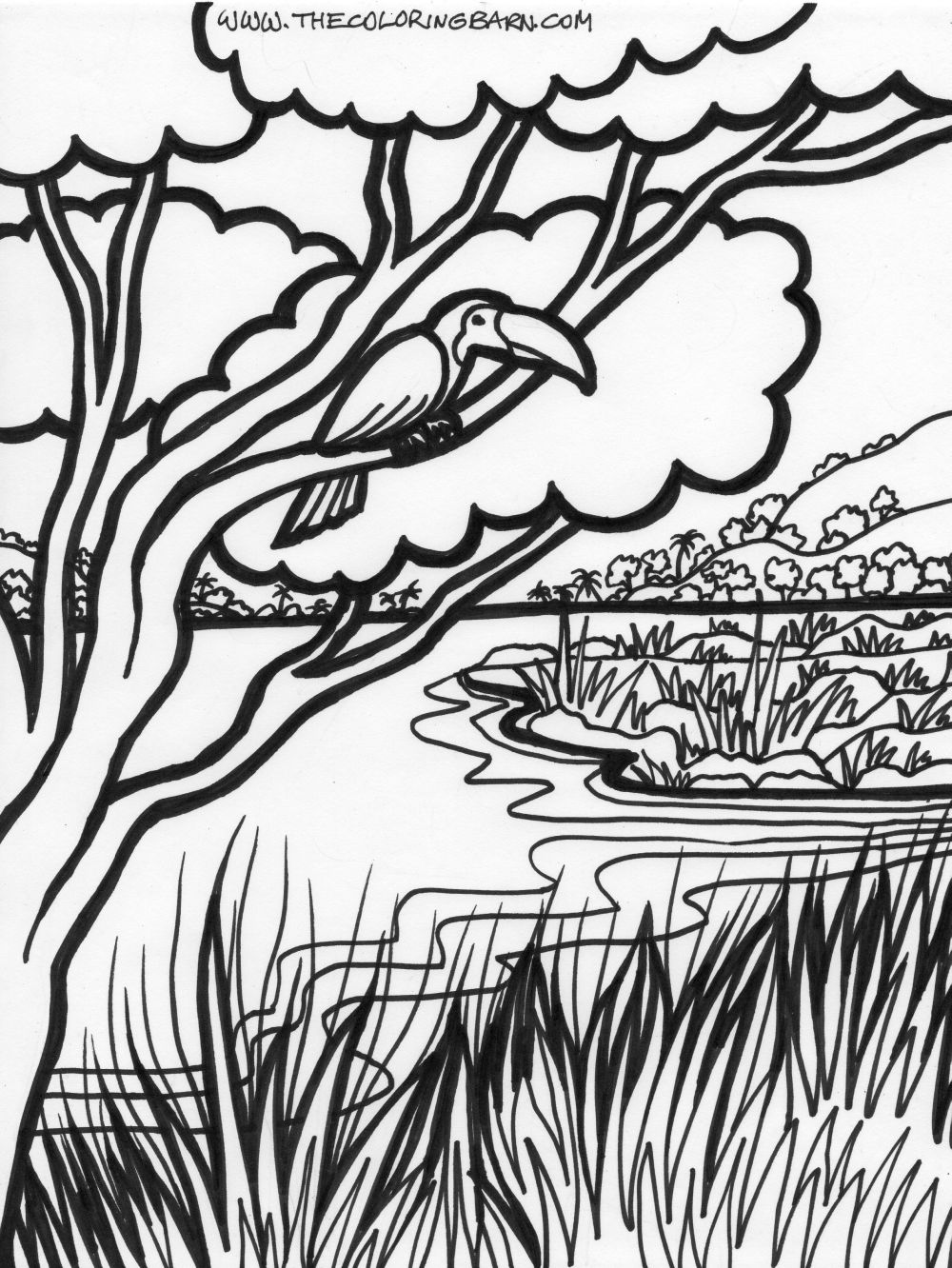 rainforest tree coloring page tropical rainforest drawing at getdrawingscom free for tree rainforest page coloring