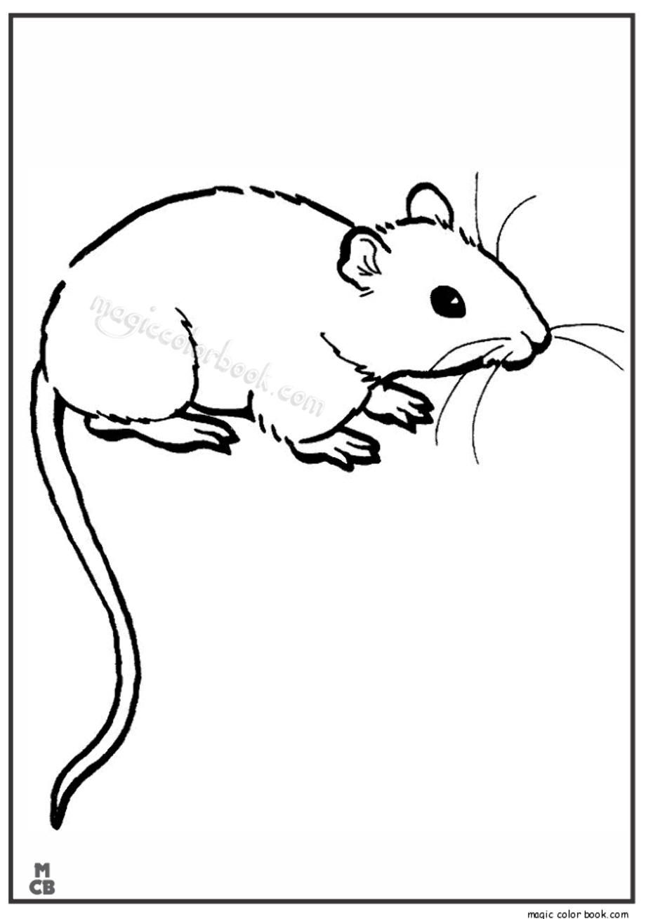 rat pictures to color free online coloring pages thecolor pictures rat to color