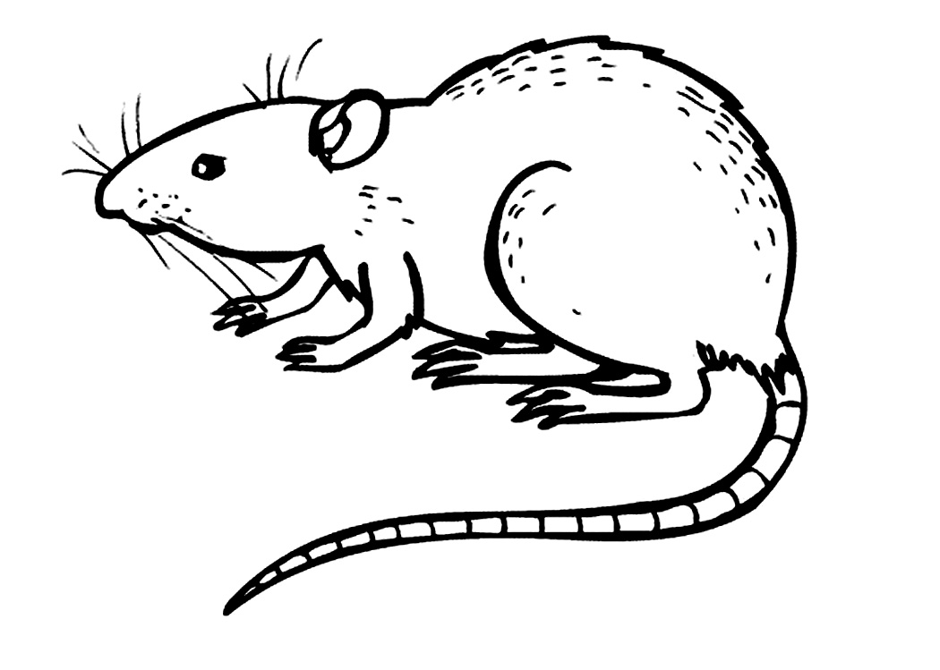 rat pictures to color free printable rat coloring pages for kids color rat to pictures