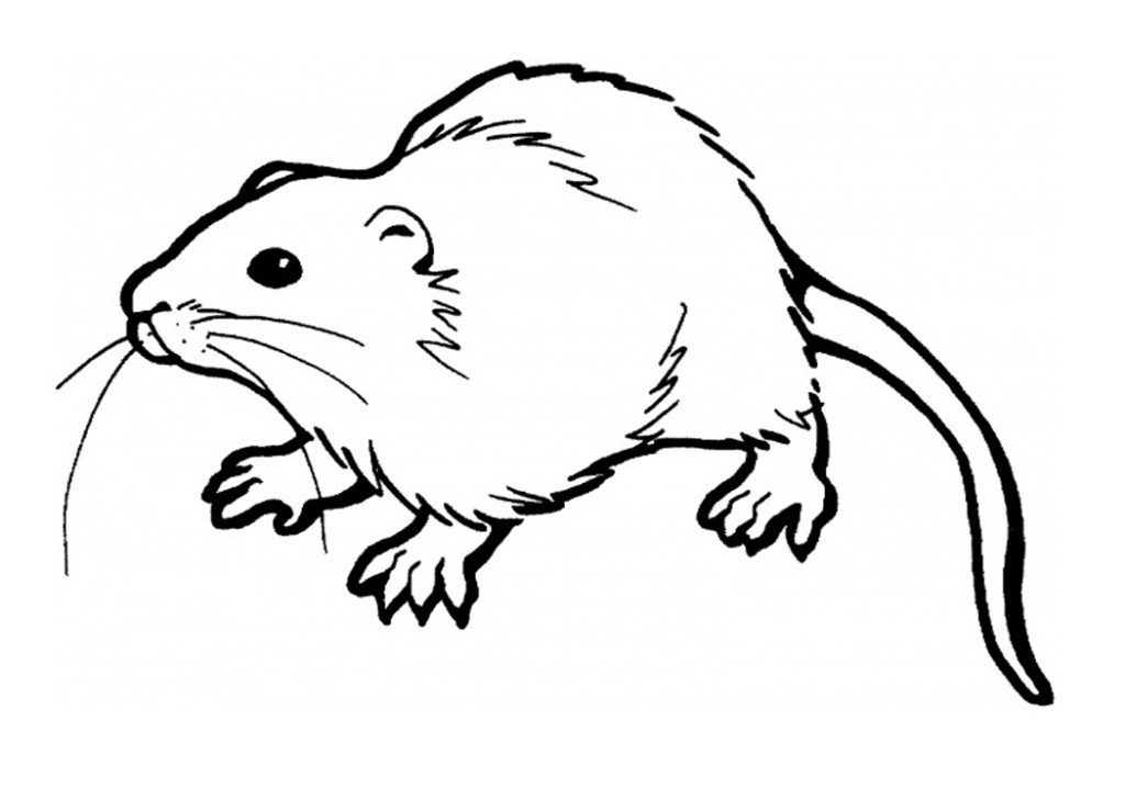 rat pictures to color free printable rat coloring pages for kids pictures color to rat 1 1