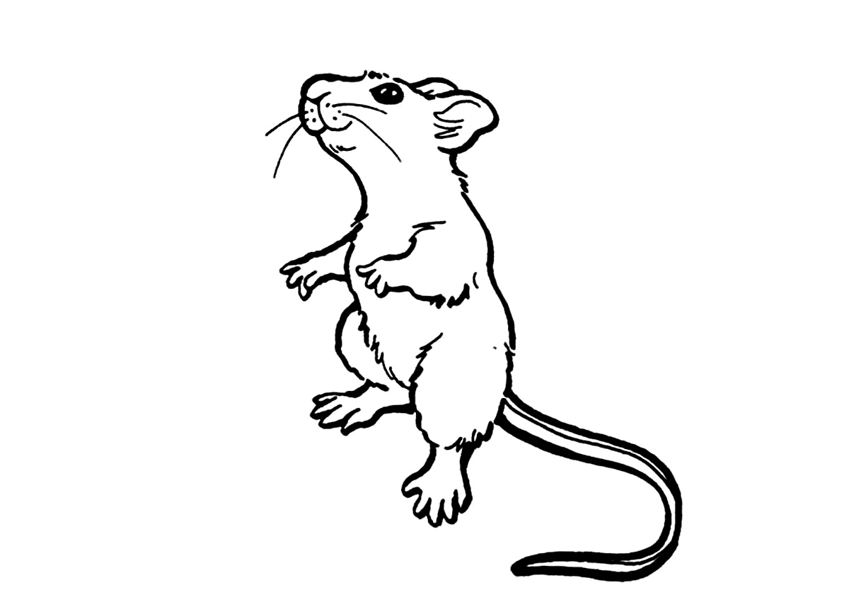 rat pictures to color rat 17 coloring page free printable coloring pages to color rat pictures