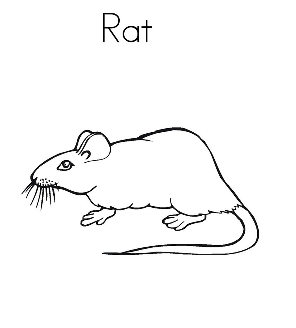 rat pictures to color rat 25 coloring page free printable coloring pages rat pictures to color