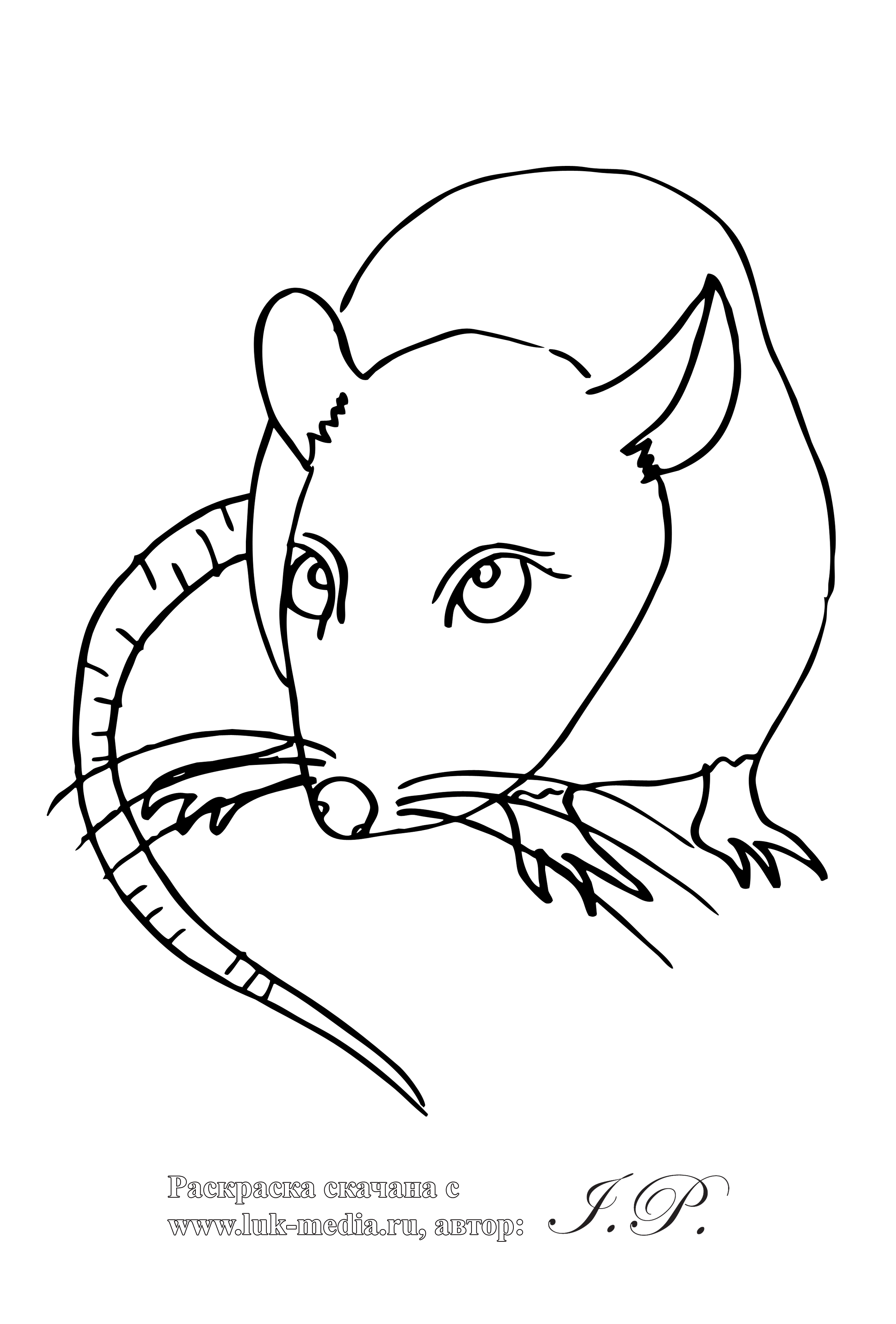 rat pictures to color rat coloring page coloring home pictures to rat color