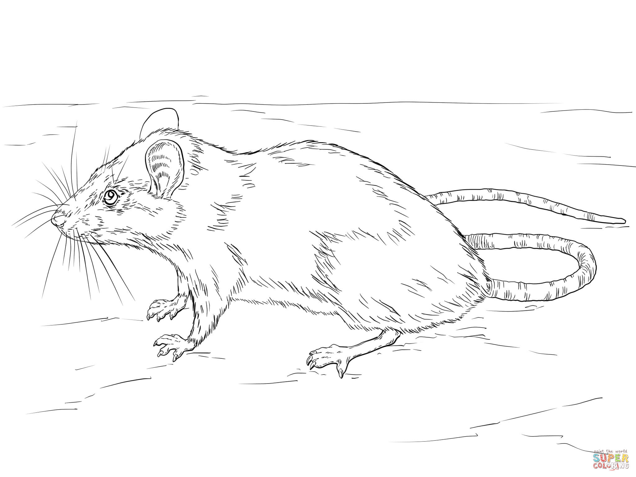 rat pictures to color rat coloring pages print coloring 2019 rat color pictures to
