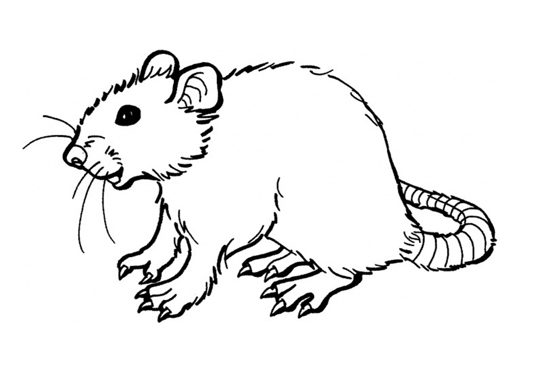 rat pictures to color rat pictures to color color pictures to rat
