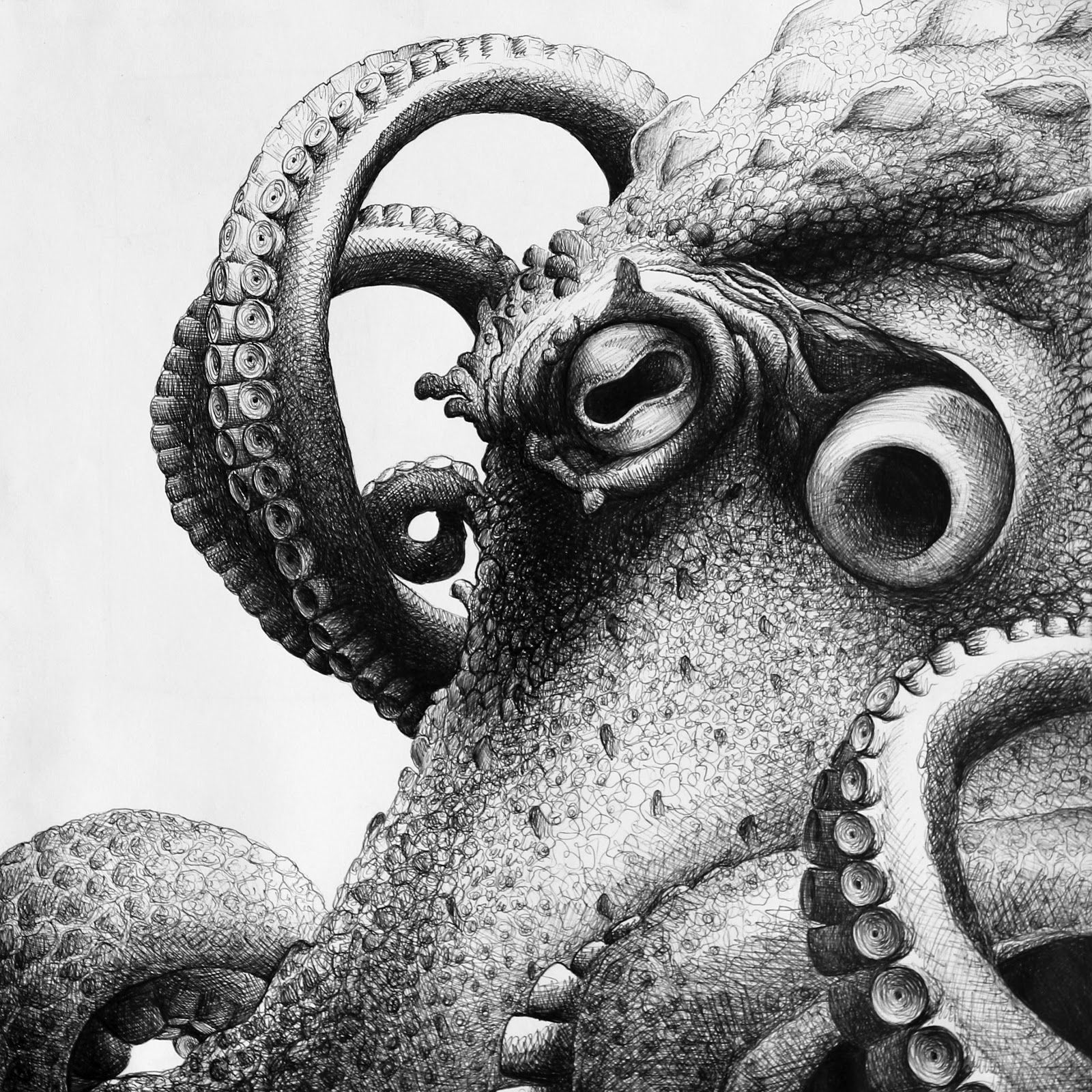 realistic octopus drawing octopus tattoo drawing at paintingvalleycom explore realistic octopus drawing
