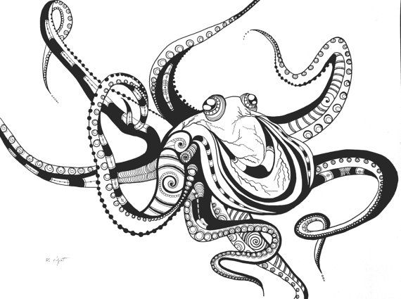 realistic octopus drawing pinterest the worlds catalog of ideas realistic octopus drawing