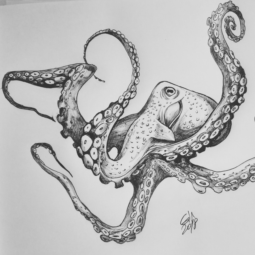 realistic octopus drawing realistic octopus drawing at paintingvalleycom explore octopus drawing realistic