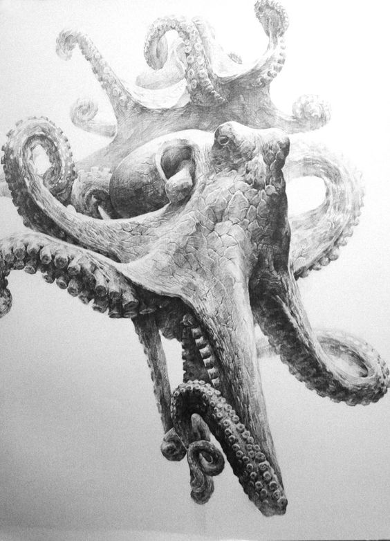 realistic octopus drawing try a new tribal shark tattoo design tattoes idea 2015 drawing realistic octopus