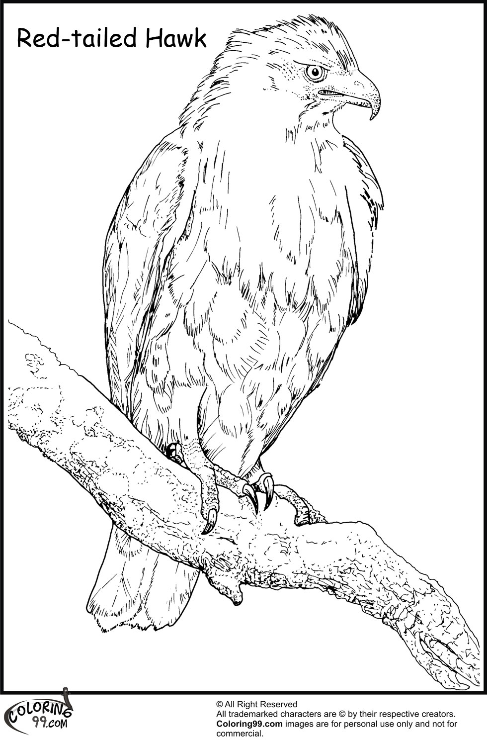 red tailed hawk coloring page red tailed hawk in flight coloring page free printable hawk red page tailed coloring