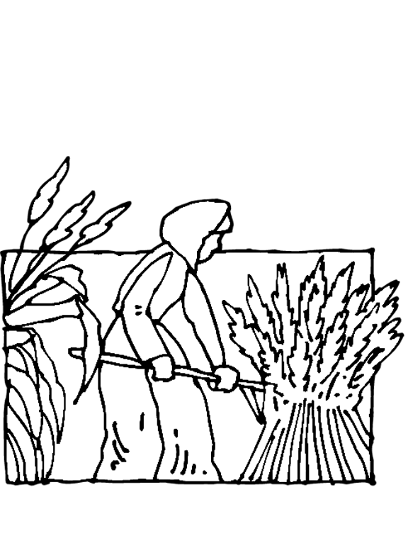 rice plant coloring page drawing wheat plant page plant coloring rice