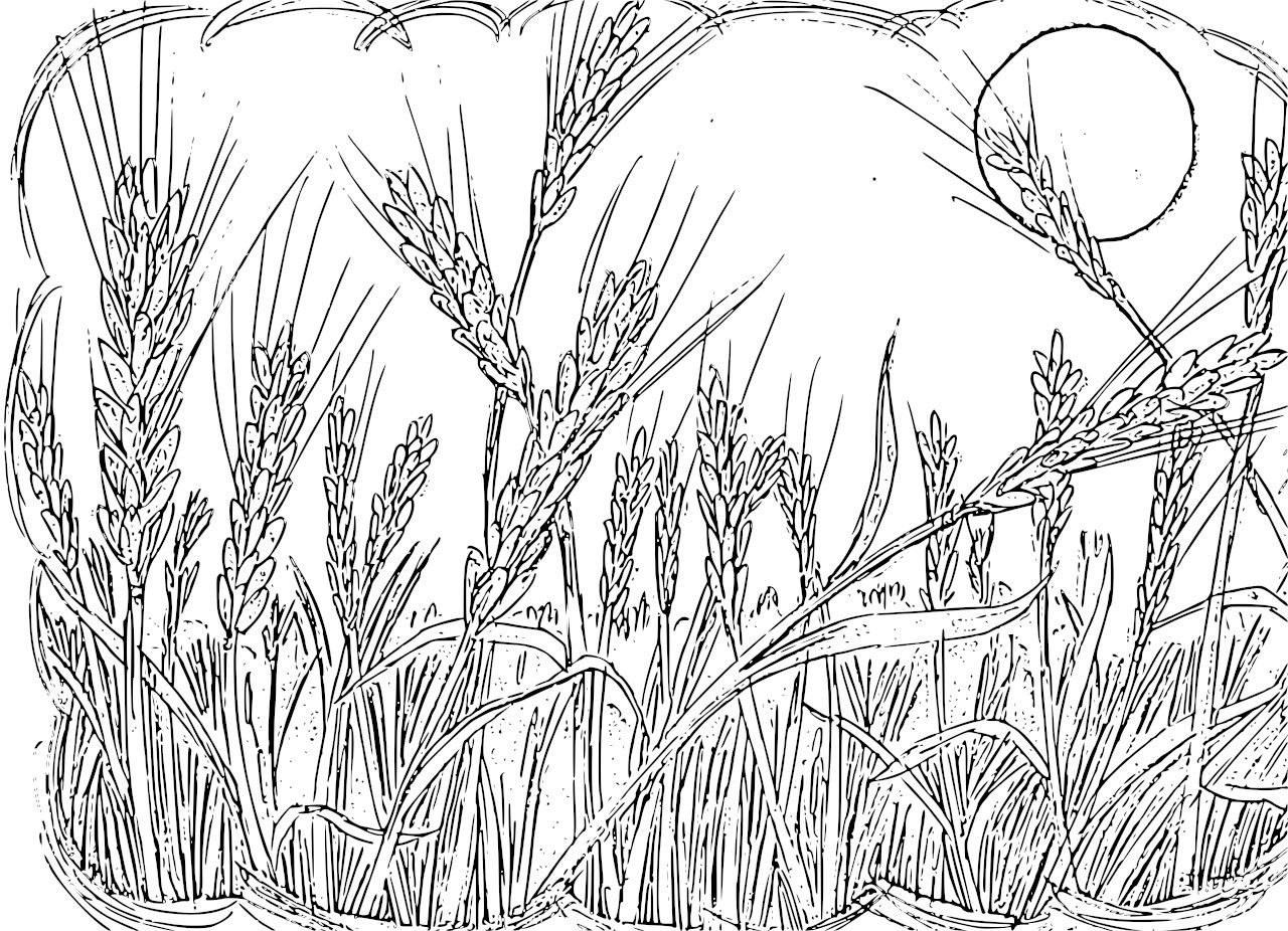 rice plant coloring page rice clipart coloring pencil and in color rice clipart plant page coloring rice