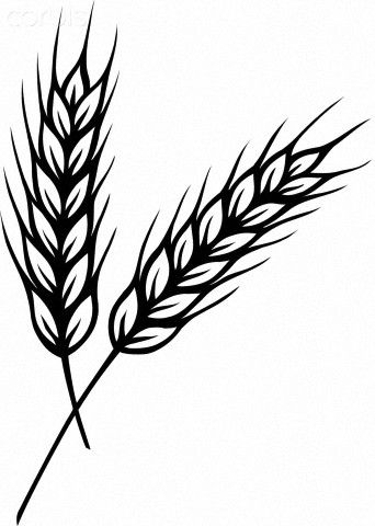 rice plant coloring page the 25 best wheat drawing ideas on pinterest flower coloring plant page rice