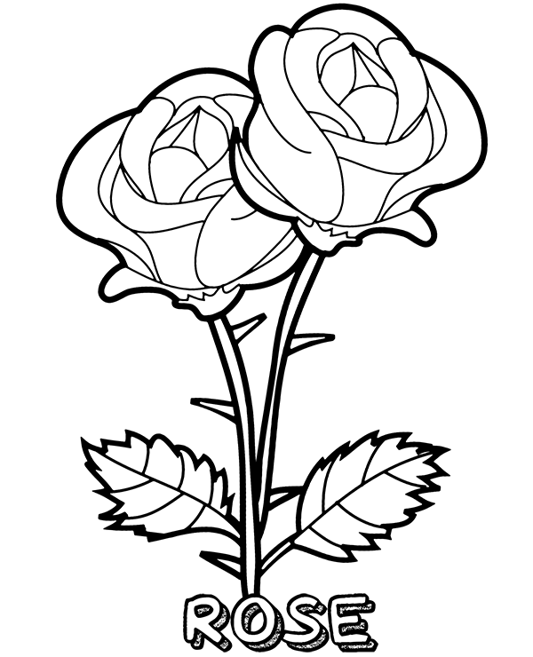 rose coloring pictures printable blooming rose flowers coloring sheet coloring pictures rose