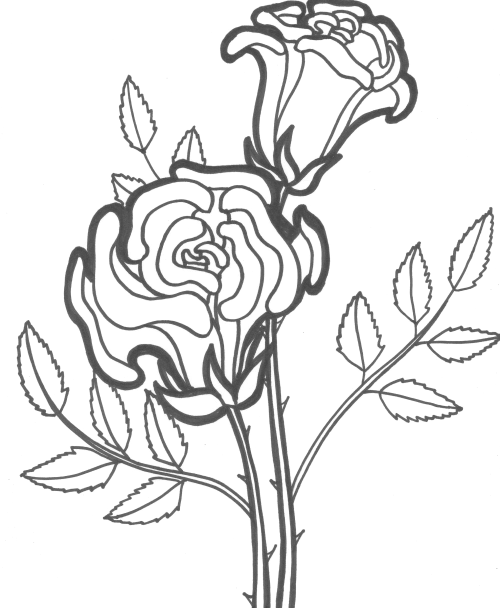 rose coloring pictures rose flower blooming coloring page kids play color rose coloring pictures