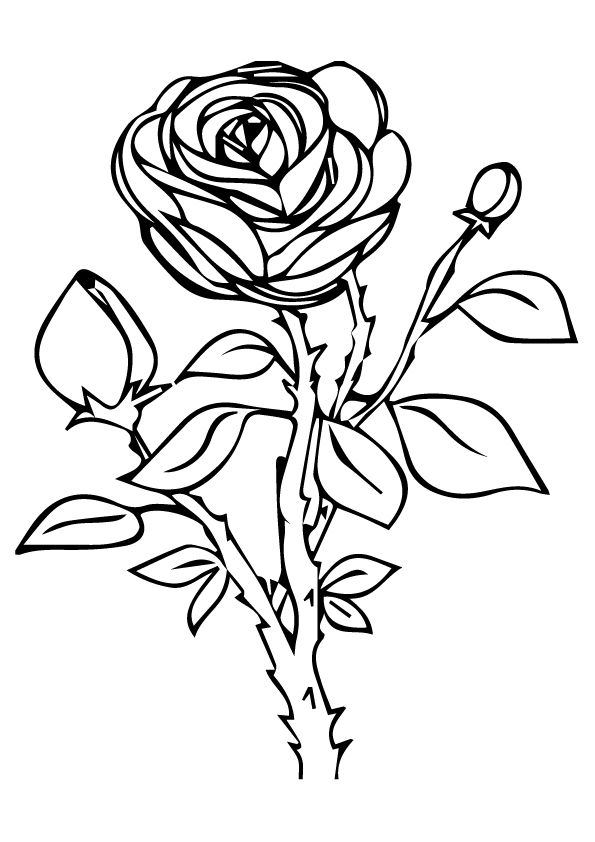 rose for coloring free printable rose coloring pages rose coloring pictures coloring rose for
