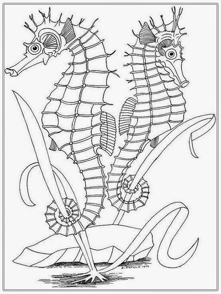 sea horse coloring pages sea horse coloring pages sea coloring horse pages