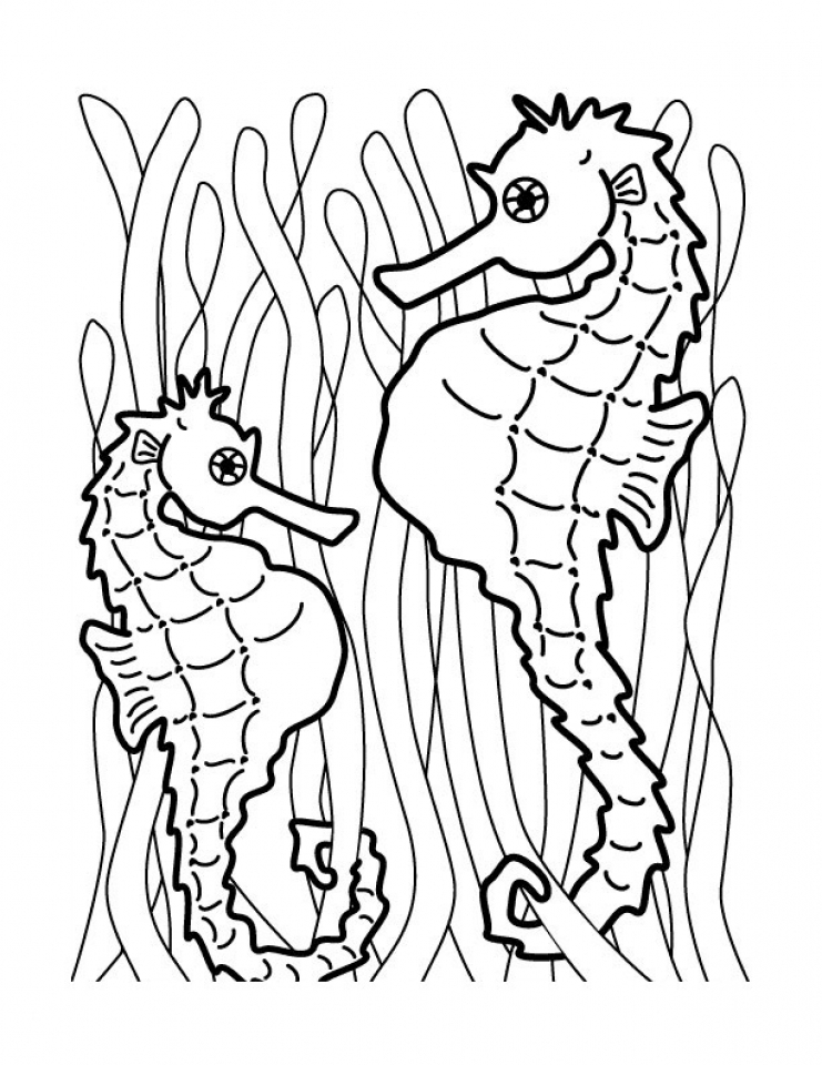 sea horse coloring pages seahorse ocean bottom coloring sheets pages for kids sea horse coloring pages