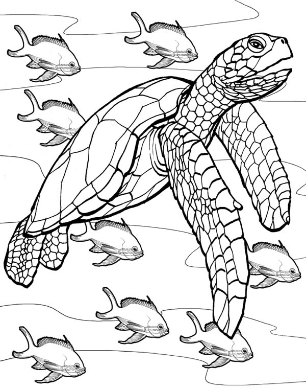 sea turtle coloring pages printable hand drawn sea turtle for adult coloring pages stock turtle printable pages sea coloring