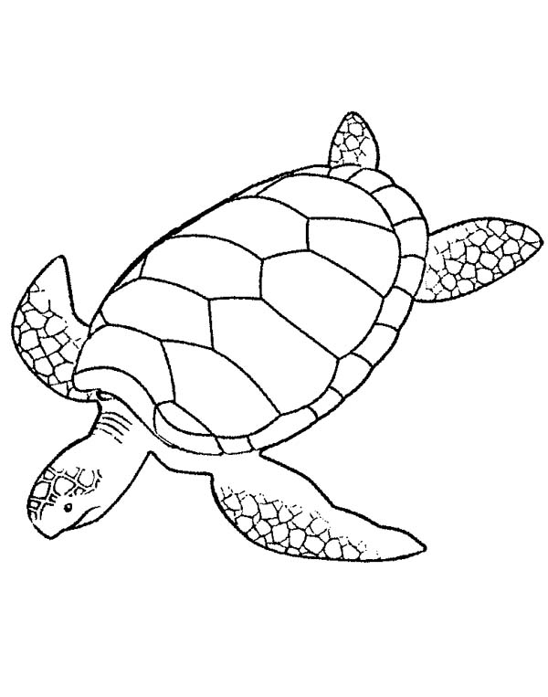 sea turtle coloring pages printable sea turtle coloring pages printable turtle sea printable coloring pages
