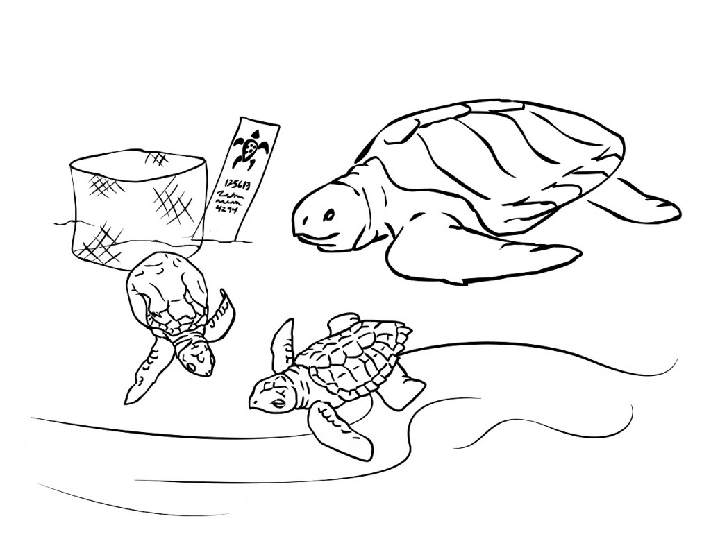 sea turtle coloring pages printable sea turtle coloring pages to download and print for free sea printable pages coloring turtle