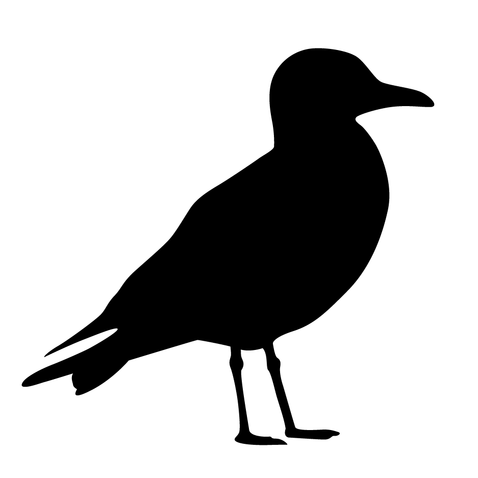 seagull silhouette best seagull illustrations royalty free vector graphics silhouette seagull