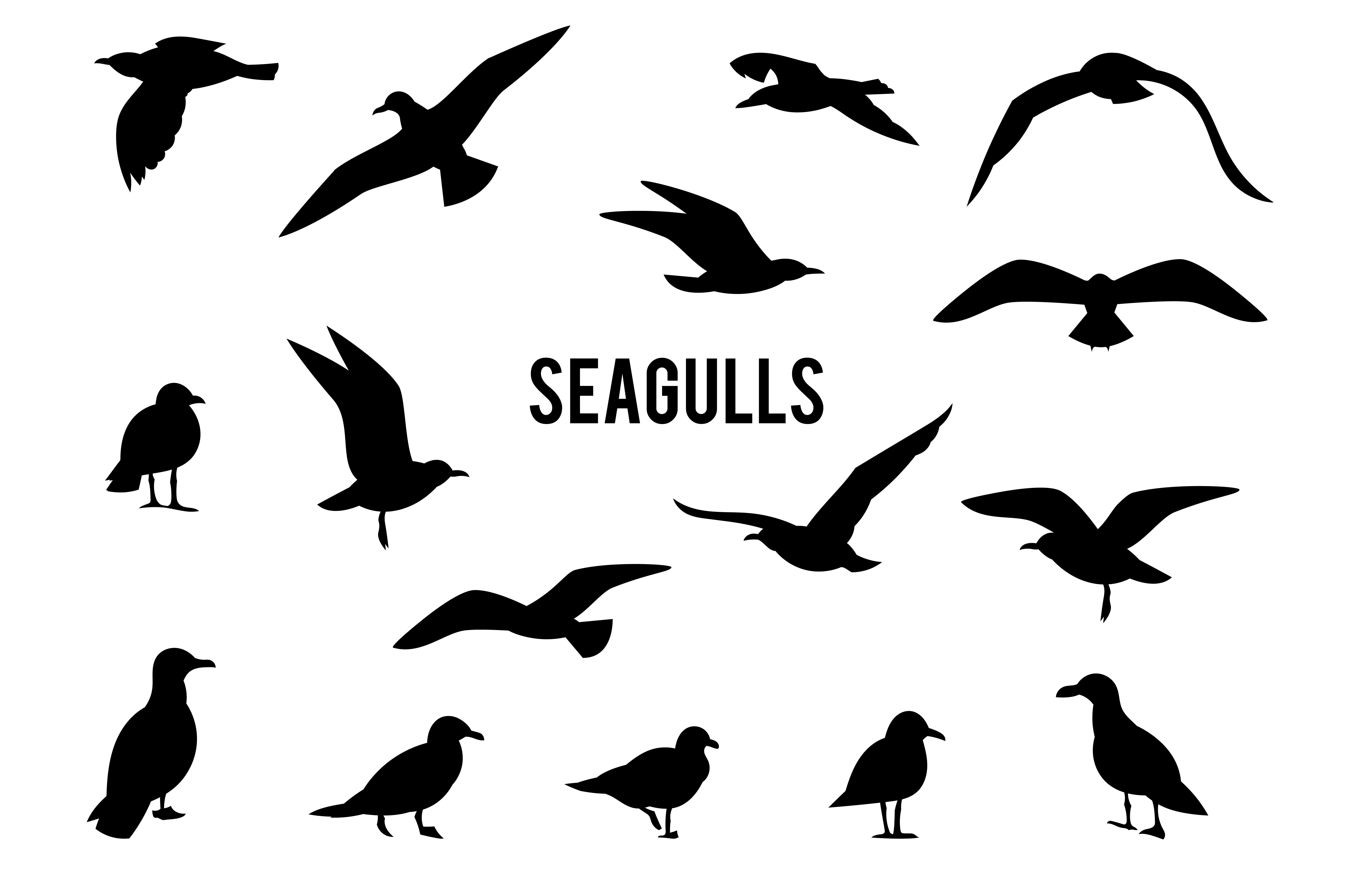 seagull silhouette fileseagullbansin2 silhouette bwsvg wikimedia commons silhouette seagull