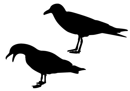 seagull silhouette royalty free seagull clip art vector images seagull silhouette