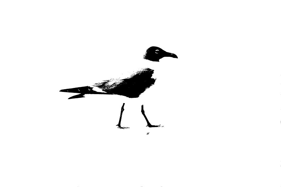 seagull silhouette seagull clipart black and white free download on clipartmag silhouette seagull