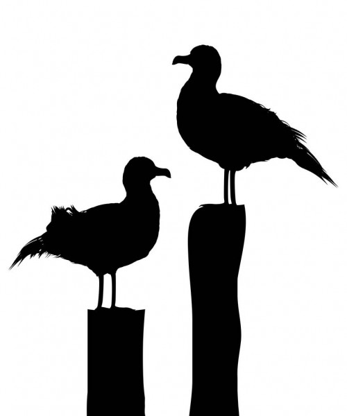 seagull silhouette seagull silhouette at getdrawings free download seagull silhouette