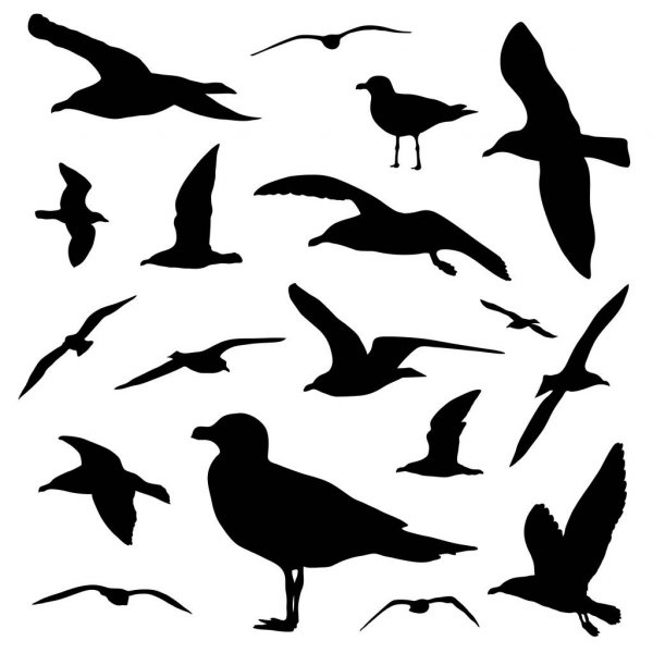 seagull silhouette seagull silhouette the letter of introduction silhouette seagull