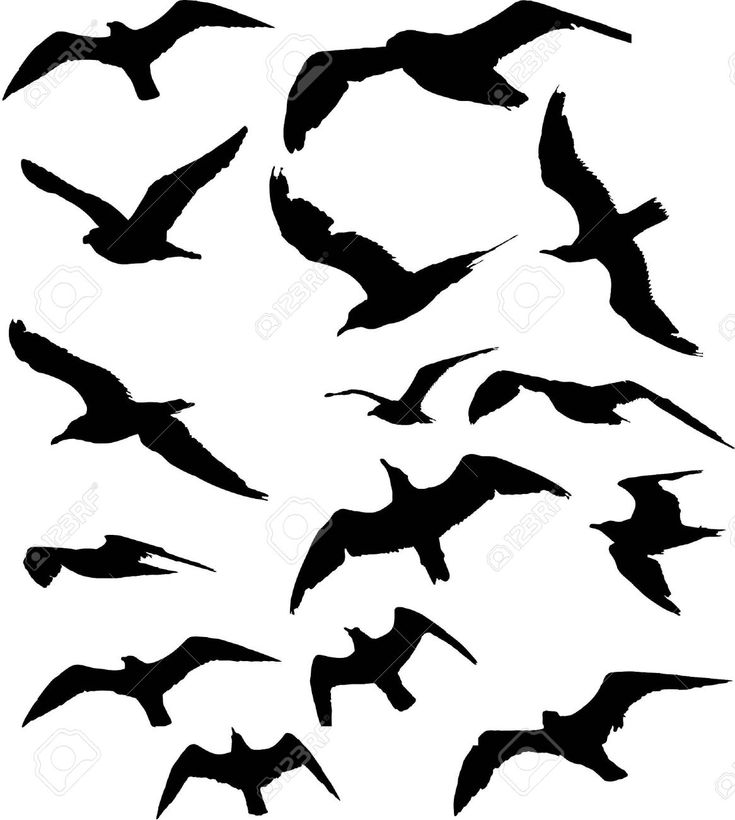 seagull silhouette transparent seagull silhouette png gulls free silhouette seagull