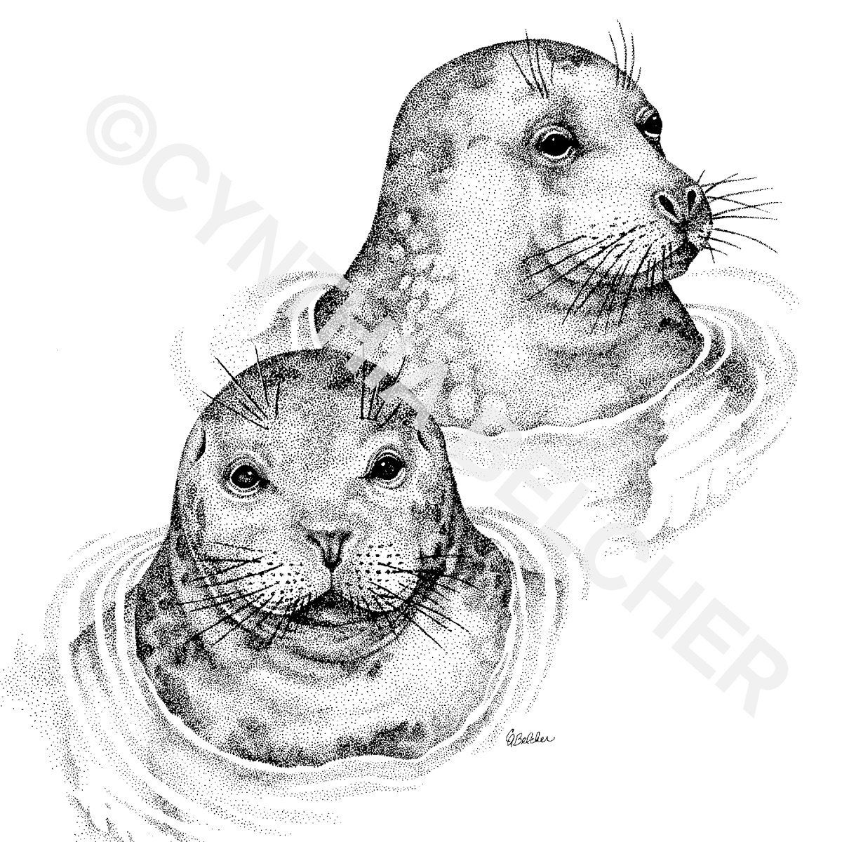 seal drawing cartoon seal drawing in 4 steps with photoshop art kit drawing seal