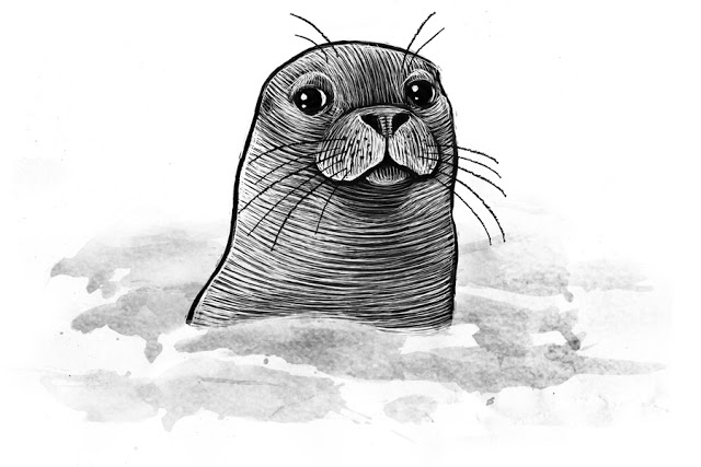seal drawing southern elephant seal pencil drawing how to sketch drawing seal