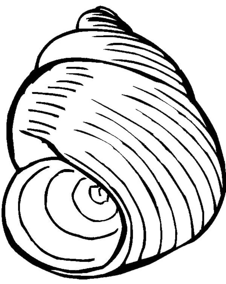 seashell coloring page coloring pages of seashells coloring home page coloring seashell