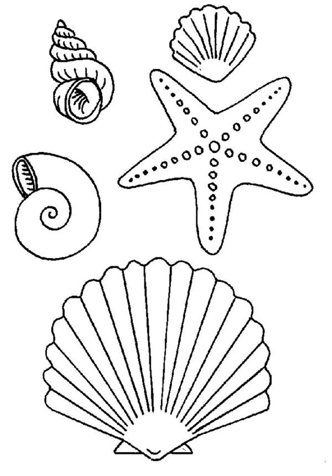 seashell coloring page coloring pages of seashells coloring home seashell coloring page