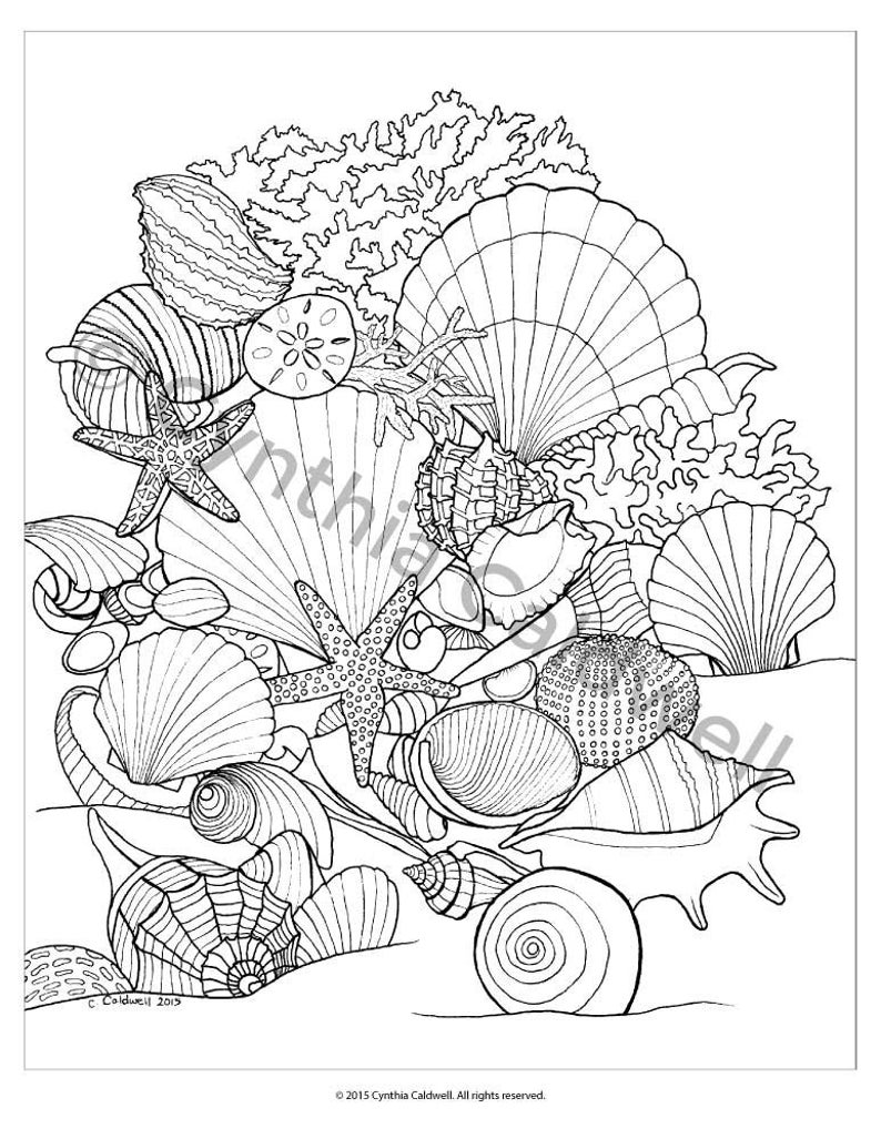 seashell coloring page coloring pages of seashells coloring home seashell coloring page 1 1