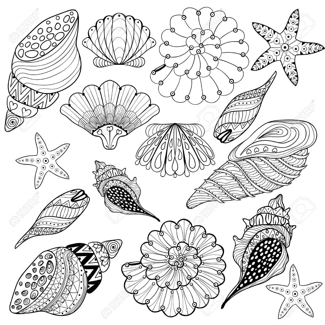 seashell coloring page shell coloring page sea shells clipart black and white coloring page seashell