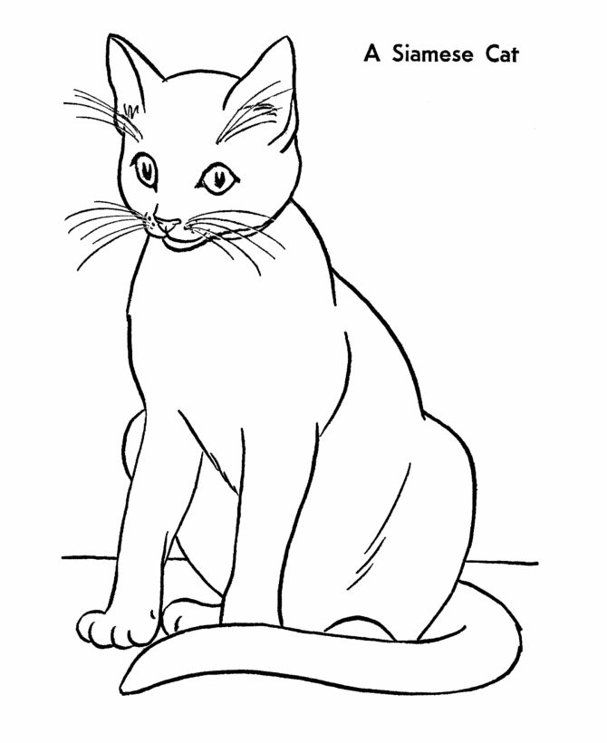 siamese coloring pages cat coloring page siamese cat coloring book pictures siamese pages coloring