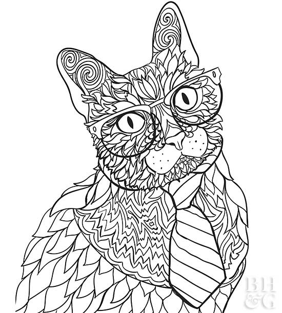 siamese coloring pages pet coloring pages siamese coloring pages