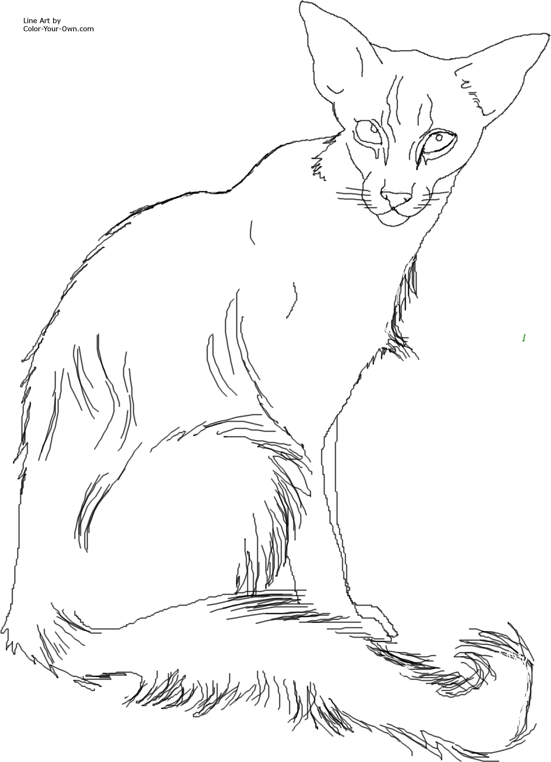 siamese coloring pages realistic siamese cat coloring pages siamese coloring pages