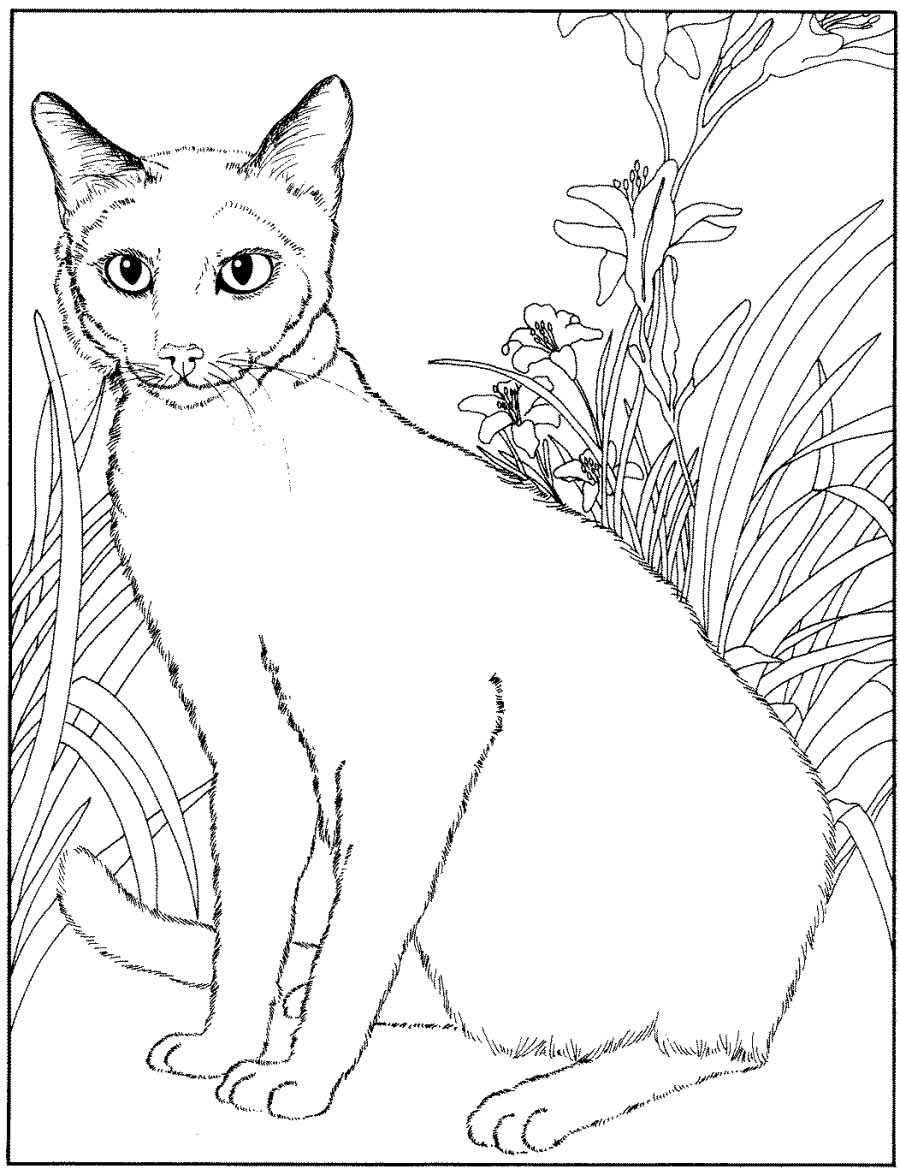 siamese coloring pages siamese cat animals adult coloring pages pages siamese coloring