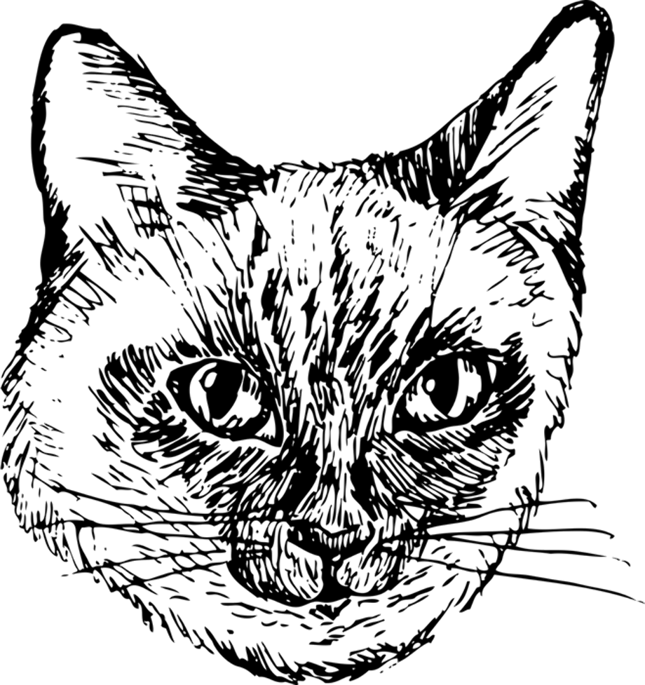 siamese coloring pages siamese cat apple face coloring pages print coloring 2019 siamese coloring pages