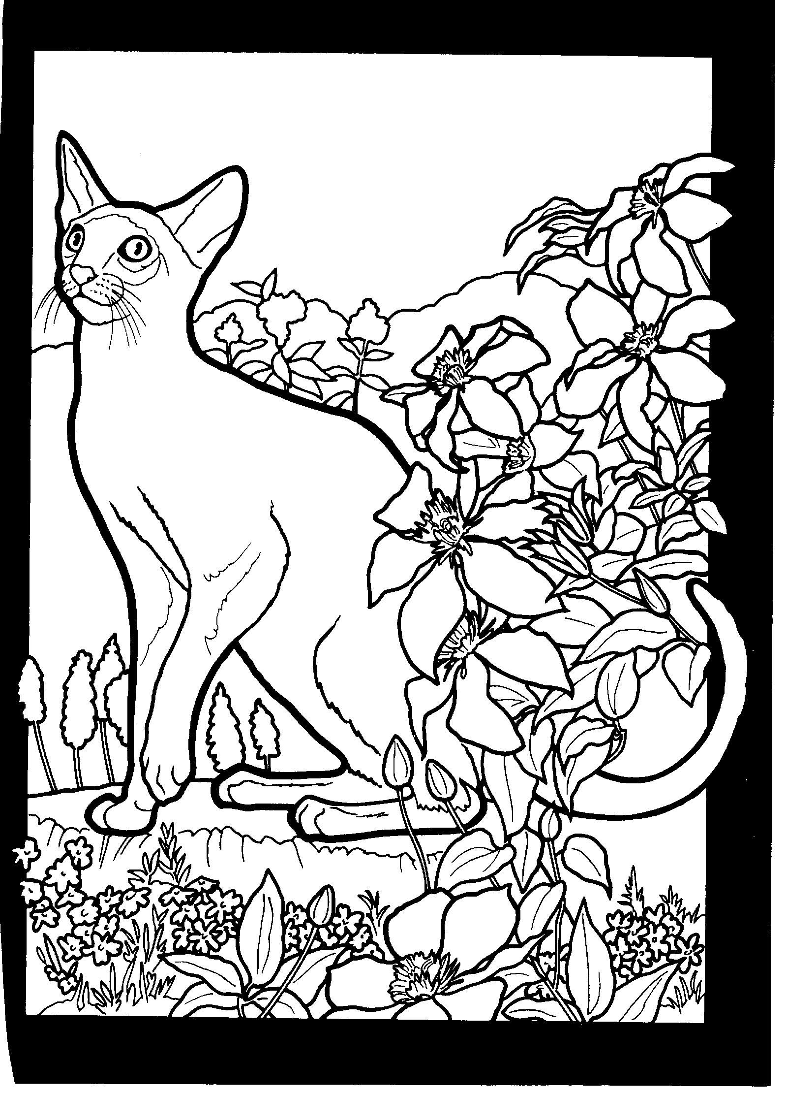 siamese coloring pages siamese cat coloring pages dbestcoloringpagescom cat pages siamese coloring