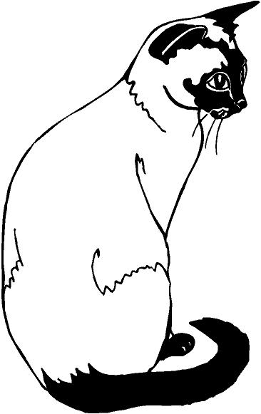 siamese coloring pages siamese cat drawings clipart best siamese coloring pages