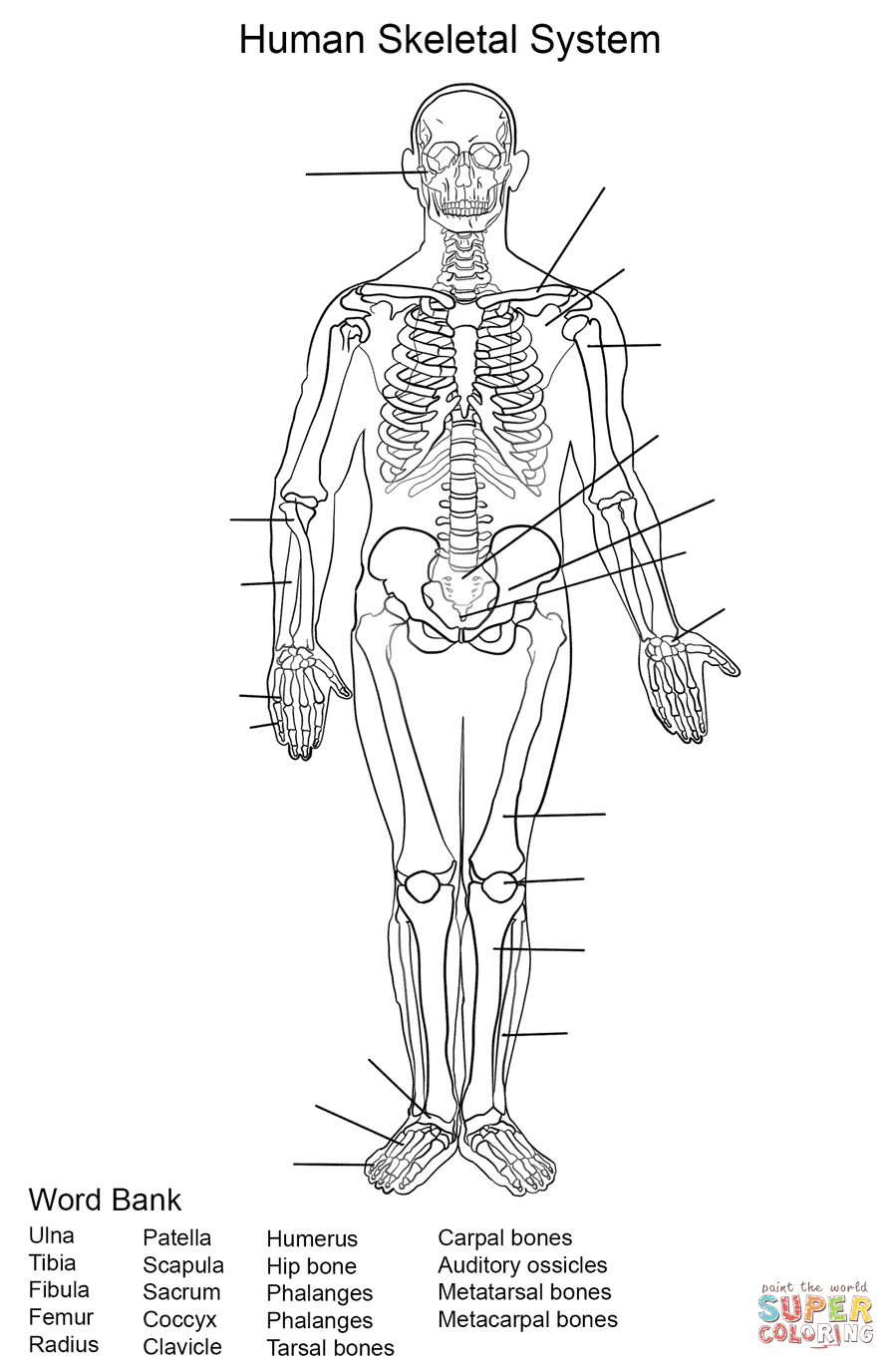 skeletal system coloring pages human skeletal system worksheet coloring page free skeletal system coloring pages
