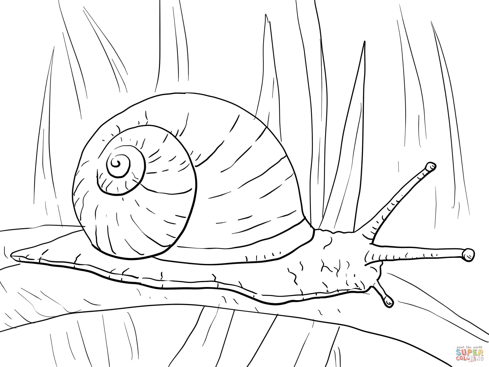 snail coloring page 15 snail coloring page print color craft snail page coloring