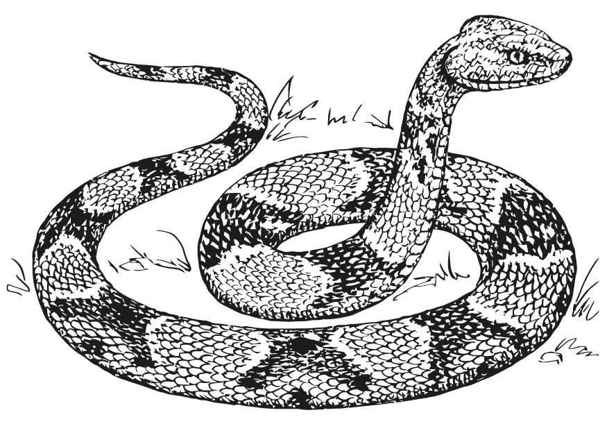 snakes to color coloring pages color snakes to