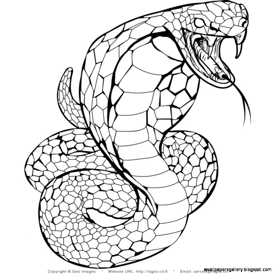snakes to color snake printable coloring pages coloring home snakes to color